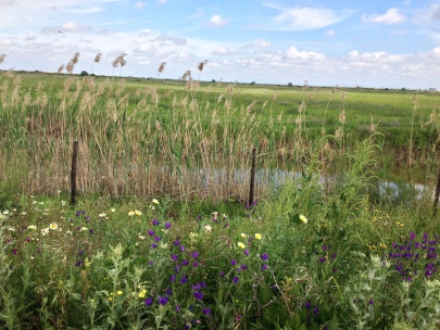wetland beauty