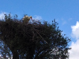 We saw tons of storks in their nests